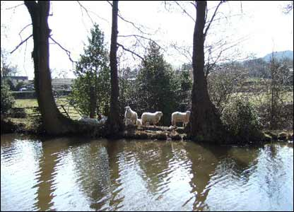 A quiet moment on the towpath of the Brecon and Monmouth canal, as taken by Peter Weston