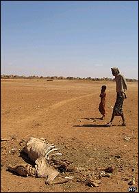 African farmland, AP