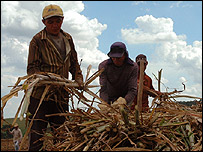 Brazilian farmers