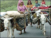 Donkey carrying goods in an Indian village