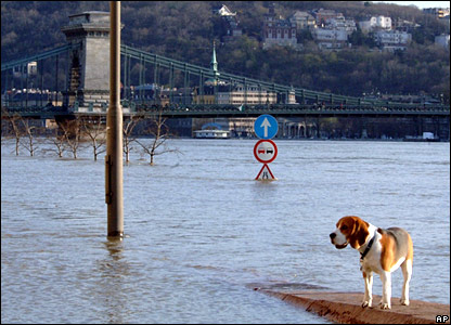 Dog on the flooded embankment of the River Danube
