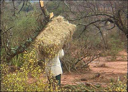 Man carrying bale of hay