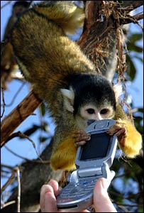 A monkey grabs a phone at London Zoo