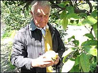 Antonio Familiari, bergamot grower in Calabria