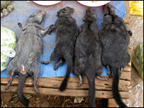 Laotian rock rats on a table (Peter Clyne)