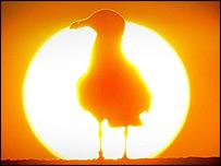 Bird in Cellardyke, Fife