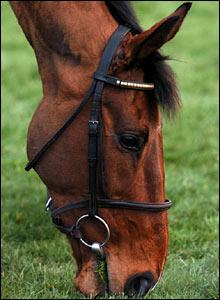 Last year's Grand National winner Hedgehunter