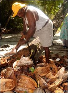 Former islander opening coconuts