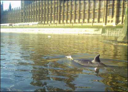 Whale swims past Parliament Buildings. Picture courtesy of the Marine Connection