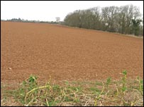 Field (BBC)