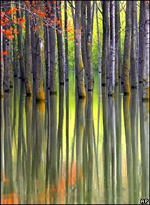A flooded forest in Bechet, Romania