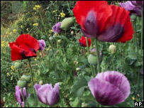 Poppies (Image: AP)