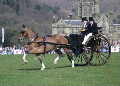A carriage at the Festival of the Horse in Margam (Keri Beal)