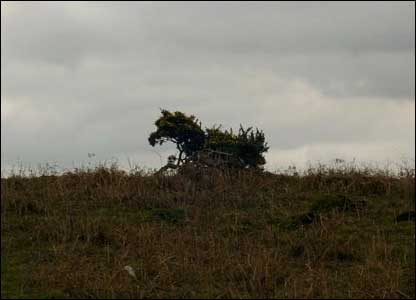 Chris Stirling from Gorseinon reckons this silhouette of gorse bushes near Pontarddulais looks just like a horse