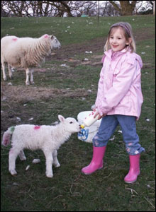 Hanah feeding a lamb on farm in Abercraf (Enid Gwillim)