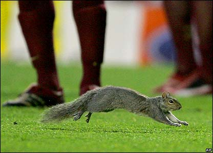A squirrel appears on the pitch