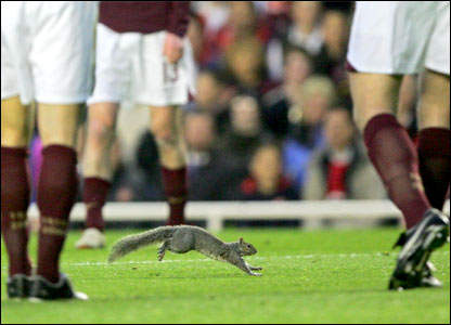 A squirrel runs across the pitch at Highbury