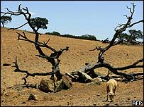 Sheep grazes in drought-stricken Portugal