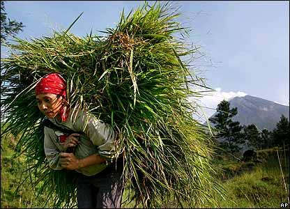 Villager carrying grass