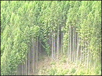 Coedwig Tywi
