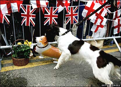 A sniffer dog grabs a Corgi balloon in its mouth as it checks the route of the Queen's walkabout in Windsor