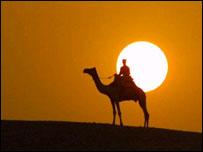 Camello en África