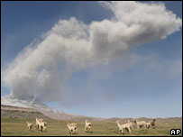 The Ubinas volcano spews smoke in southern Peru alarming a herd of alpacas