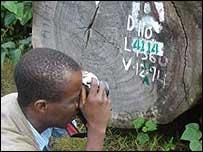 Silas Siakor taking photos of timber