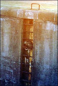 Badger stuck on ladder (pic: Scottish SPCA)