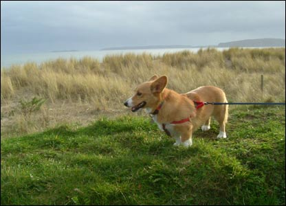 Huw Thomas's dog Eurwen on holiday in Pwllheli