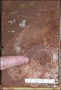 Plateosaurus specimen  Image: Jorn Harald Hurum