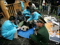 Xiang Xiang receives a final check-up