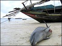 Dead dolphin in Zanzibar