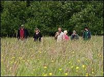 Culm grassland