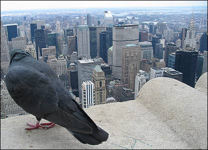 Bird's eye view of New York from the ESB Observation Deck