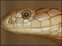 King cobra (file image)
