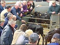 Carmarthen livestock market