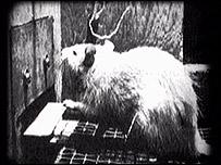 Experimentos neurocient�ficos con ratas