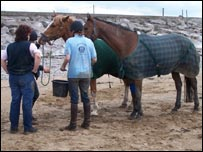The horses are washed down after their mud ordeal