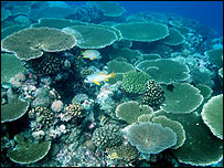 Healthy coral reef  Image: University of Newcastle