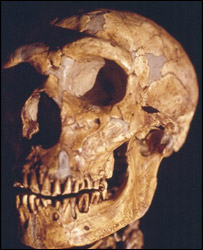 Neanderthal skull   Image: BBC