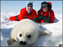 Heather Mills and Sir Paul McCartney protesting in Canada against the annual seal slaughter