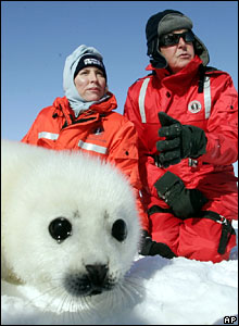 Mills and Sir Paul protest earlier this year in Canada against the annual seal slaughter