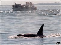 Orca (Image: AP)