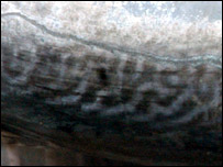 Close up of the marking on the tuna fish (Picture taken by the BBC's Odhiambo Joseph)
