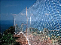 Mistnets, like this one in Italy, are used to trap birds