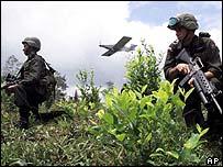 Soliders in a coca field
