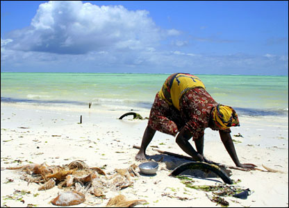 A woman digs on a beach in Zanzibar, sent in by BBC News website reader Farley Baricuatro
