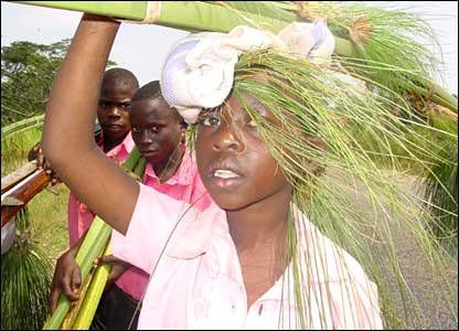 A Ugandan boy carries papyrus on his head, sent in by BBC News website reader Paul Matovu