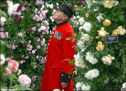 Chelsea pensioner Sgt Stan Pepper admires the roses